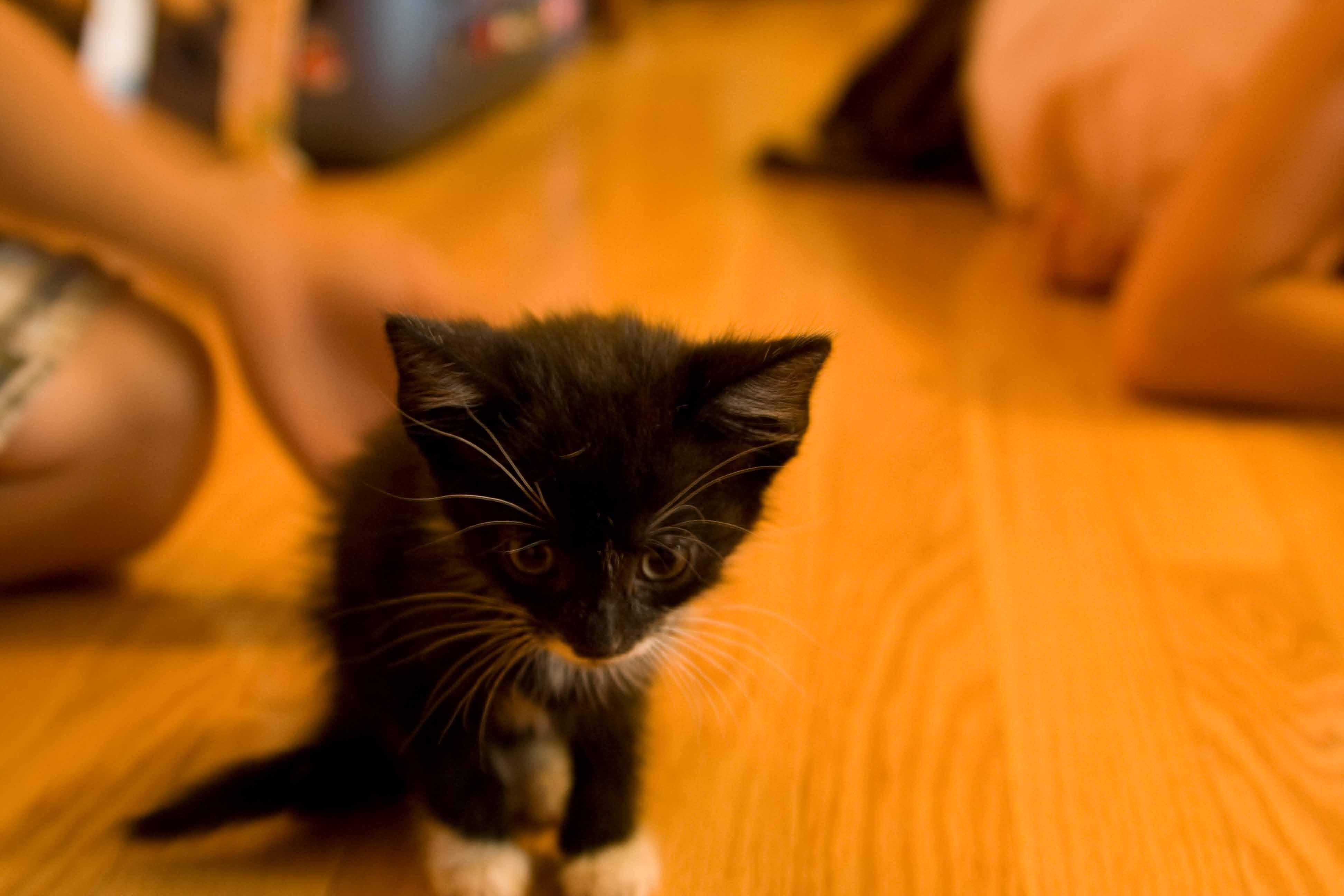 A Virtuous Kitten
